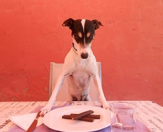 foto-chuche-comiendo -alimentacion-perros