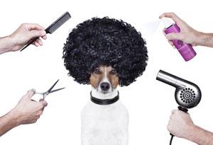 peluqueria-tienda